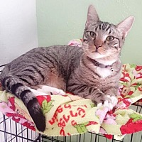 Adopt A Pet :: BIG BABY - Lawton, OK