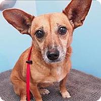 Terrier (Unknown Type, Medium) Mix Dog for adoption in Portland, Oregon - Rachel