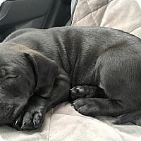 Adopt A Pet :: Oliver - Cincinnati, OH