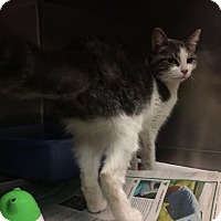 Adopt A Pet :: Alanis - Janesville, WI
