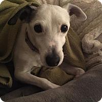 Adopt A Pet :: Doser - Blue Bell, PA
