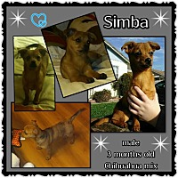 Adopt A Pet :: Simba - Richmond, CA