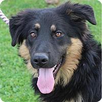 Adopt A Pet :: SITKA - Red Bluff, CA
