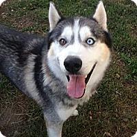Adopt A Pet :: Carter - Elkhart, IN