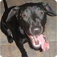 Adopt A Pet :: Vegas - Kingwood, TX