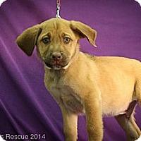 Adopt A Pet :: Jimbo - Broomfield, CO