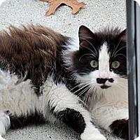 Adopt A Pet :: Chaplin - Memphis, TN