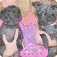 Adopt A Pet :: Noodles & Gidget - Bonded Pair - Greensboro, NC