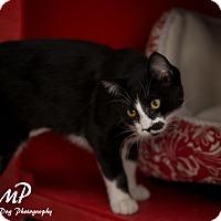 Adopt A Pet :: Missy - Fountain Hills, AZ