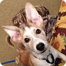 Adopt A Pet :: Kora