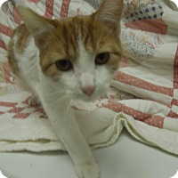 Adopt A Pet :: Butterscotch - Medina, OH