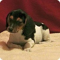 Adopt A Pet :: Schroeder - East Sparta, OH