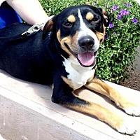 Adopt A Pet :: Freckles - Phoenix, AZ