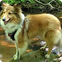 Adopt A Pet :: Charlie - Charlottesville, VA