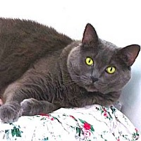 Adopt A Pet :: Casey - Davis, CA