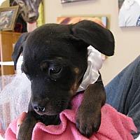 Adopt A Pet :: Miracle - Charlemont, MA