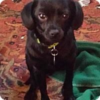 Adopt A Pet :: Trajan - Atlanta, GA