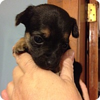 Adopt A Pet :: Aidan - Gilbert, AZ