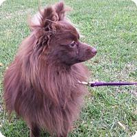 Adopt A Pet :: RALPHIE - East Windsor, CT
