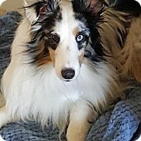 Adopt A Pet :: Paladin - Maryland Heights, MO