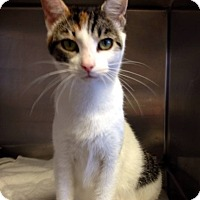 Adopt A Pet :: Davie - Providence Forge, VA