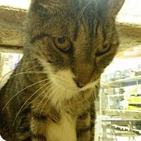 Adopt A Pet :: Divot - Salem, NH