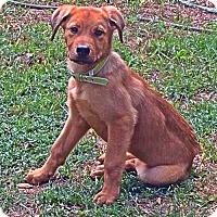 Adopt A Pet :: Penelope - Albertville, MN