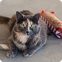 Adopt A Pet :: Dolly - St Helena, CA
