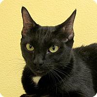 Adopt A Pet :: Mimi - Eastsound, WA