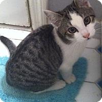 Adopt A Pet :: Hillary - Philadelphia, PA