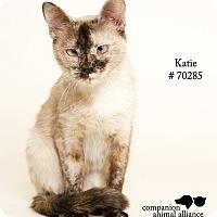 Adopt A Pet :: Katie - Baton Rouge, LA