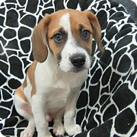 Adopt A Pet :: Fritz - Bartonsville, PA