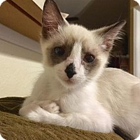 Adopt A Pet :: Oliver J - Orlando, FL