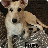 Adopt A Pet :: Fiore - Calgary, AB