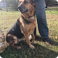 Adopt A Pet :: Sashana - Westminster, MD