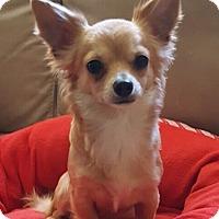 Adopt A Pet :: Eva - Overland Park, KS