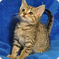 Adopt A Pet :: Alley - Richmond, VA
