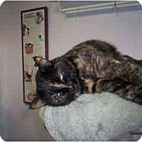 Adopt A Pet :: Miss Fit - Scottsdale, AZ