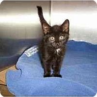 Adopt A Pet :: Shannon - Secaucus, NJ