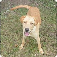 Adopt A Pet :: Sandy - Katy, TX