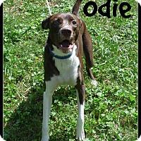 Adopt A Pet :: Odie - Cincinnati, OH