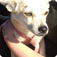 Adopt A Pet :: Romeo - Kirkland, WA