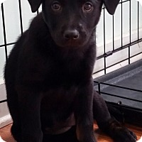 Adopt A Pet :: Chloe - Bedford, VA