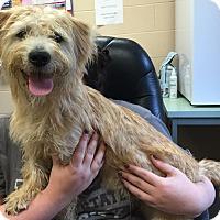 Adopt A Pet :: Dillard - Sparta, NJ