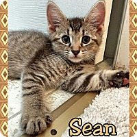 Adopt A Pet :: Sean - Atco, NJ