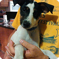 Adopt A Pet :: Eddison - Tijeras, NM