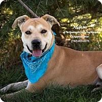 Adopt A Pet :: Chevy - Urgent! - Zanesville, OH