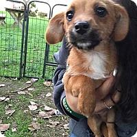 Adopt A Pet :: Merlin - Lodi, CA