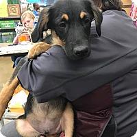 German Shepherd Dog/Terrier (Unknown Type, Medium) Mix Puppy for adoption in chicago, Illinois - Ezekiel