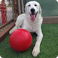 Adopt A Pet :: Jeremiah - Temecula, CA